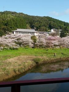 ほっと平山の桜
