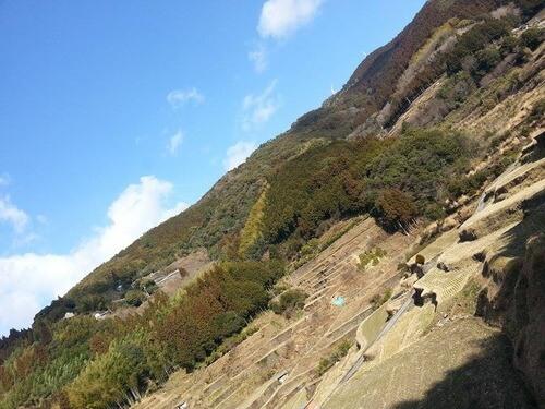 平山の風景 トトロ森