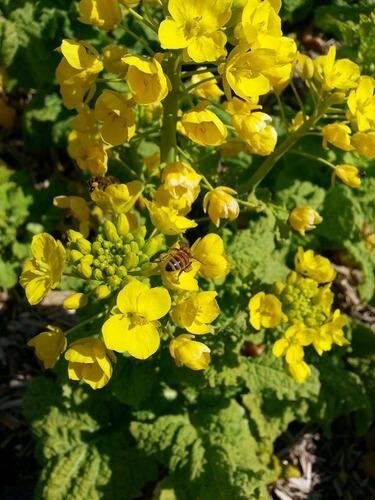 平山の風景 ミツバチが春に向けて勤しむ