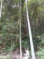 竹も綺麗に刈って頂きました