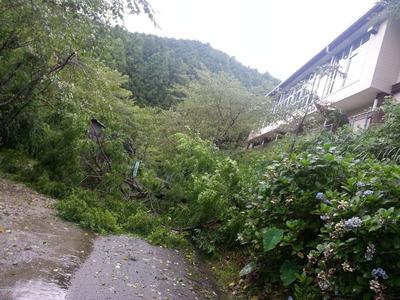 道を塞いでたセンダンの木が