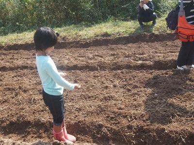 畝に麦を蒔く
