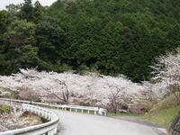 ほっと平山 桜