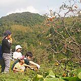 平山の果物を収穫
