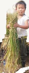 稲をもつ少年