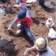 ほっと平山での秋の田舎体験-お芋掘りの写真