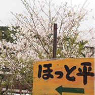 ほっと平山に咲く桜